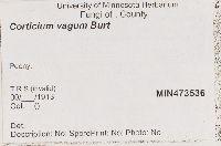 Corticium vagum image