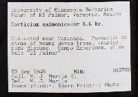 Phanerochaete salmonicolor image