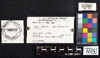 Cystoderma amianthinum image