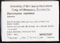 Dacrymyces capitatus image