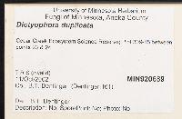 Dictyophora duplicata image