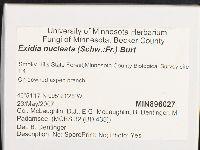 Exidia nucleata image