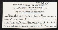 Gomphidius maculatus image