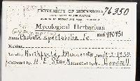 Phaeolepiota aurea image