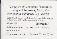 Gymnopilus penetrans image