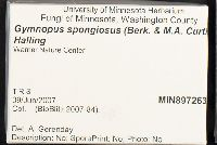 Gymnopus spongiosus image