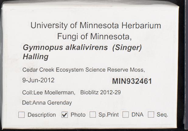 Gymnopus alkalivirens image