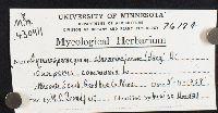 Gymnosporangium clavariiforme image