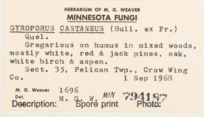 Gyroporus image