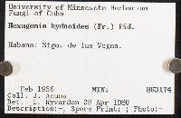 Hexagonia hydnoides image