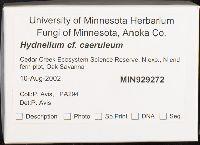 Hydnellum caeruleum image