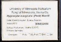 Hygrocybe marginata image