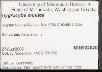 Hygrocybe miniata image