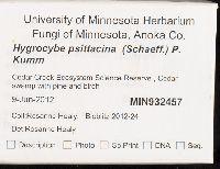 Hygrocybe psittacina image