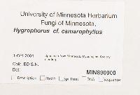 Hygrophorus camarophyllus image