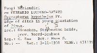 Hygrophorus hypothejus image