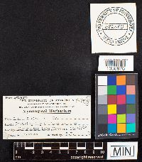 Fuscocerrena portoricensis image