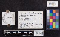 Lactarius indigo image