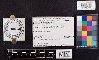 Lactarius lignyotus image