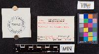 Lactarius nigroviolascens image