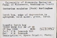 Lactarius oculatus image