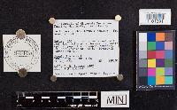 Lactarius scrobiculatus image