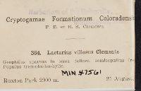 Lactarius villosus image
