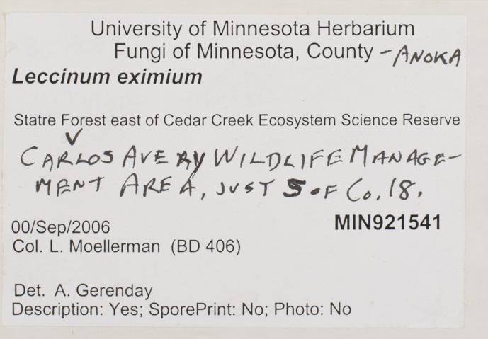 Leccinum eximium image