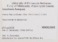 Leccinum holopus image