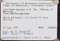 Leccinum insigne image