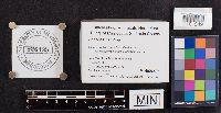 Lenzites betulina image