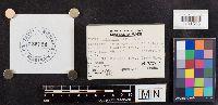 Lepiota cristata image