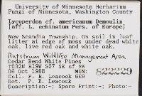 Lycoperdon americanum image