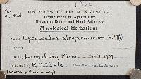 Lycoperdon atropurpureum image