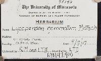 Lycoperdon gemmatum image