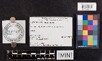 Image of Lycoperdon marginatum
