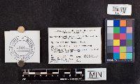 Mycena leaiana image