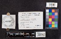 Mycena niveipes image