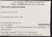 Mycena subcaerulea image