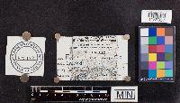 Panaeolus campanulatus image