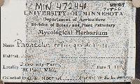 Panaeolus retirugis image