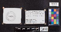 Paragyrodon sphaerosporus image