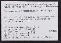 Perenniporia fraxinophila image