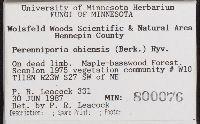 Perenniporia ohiensis image