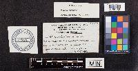 Phaeolus schweinitzii image