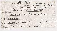 Phellinus conchatus image