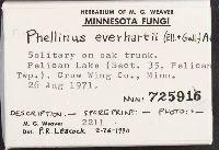 Phellinus everhartii image