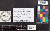 Pluteus pellitus image
