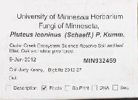 Pluteus leoninus image