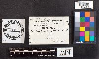 Image of Polyporus polyporus